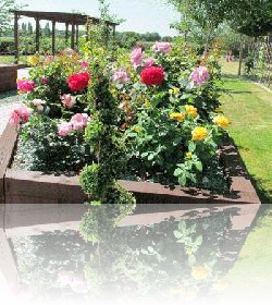 The second of the two rose beds