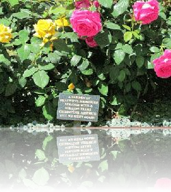 One of two rose beds